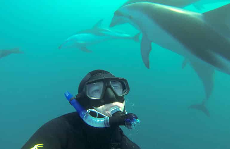 Swimming with dolphins in New Zealand