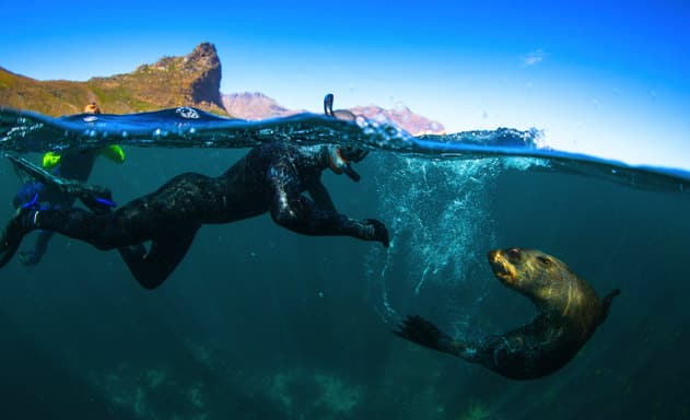 snorkeling with seals in CapeTown